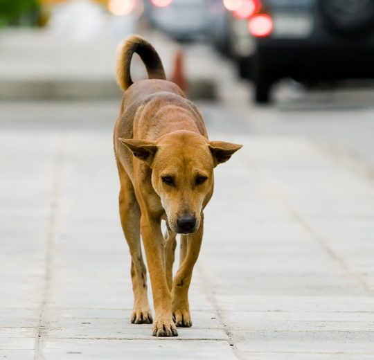 Guarda responsável de animais é tema de campanha do CRMV-SP