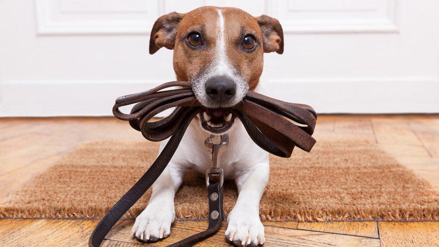 5 regras para passear com seu cachorro sem passar sufoco