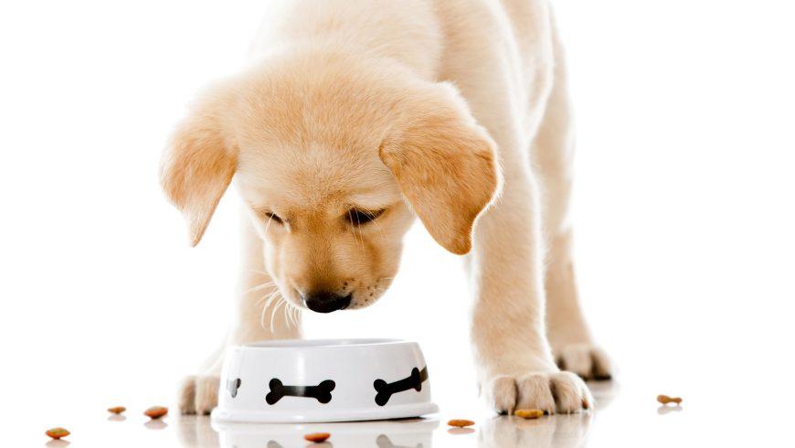 Mitos e verdades sobre a alimentação e o impacto na saúde do pet